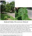 Icon of Redmond Linden